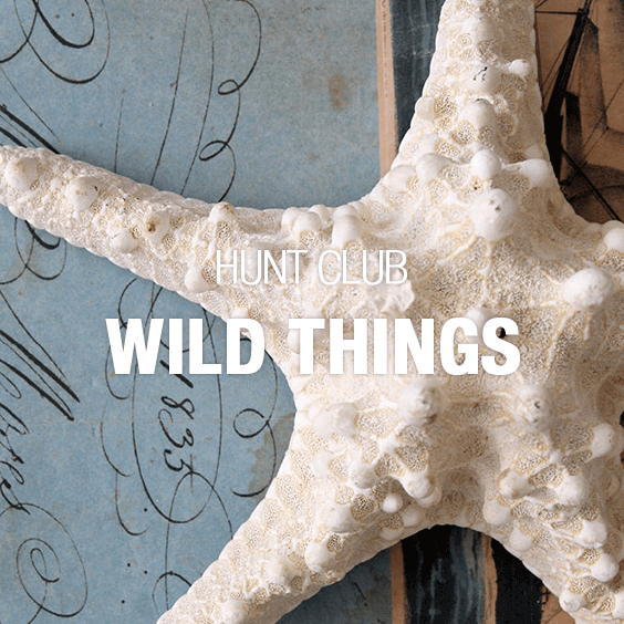 Category_Wild_Things_564x564